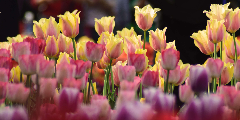 Wir kühlen Blumen für die besonderen Tage wie Muttertag